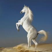Спортсмены сражаются на конях