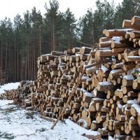 В Омске решили поднять плату за лес