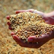 Госфонд купил у Омской области зерна на полмиллиарда