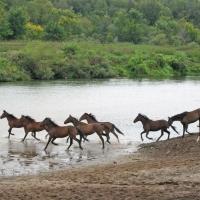 В Омской области пьяного пастуха насмерть придавил конь на водопое