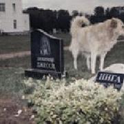 В Омске появился крематорий для домашних животных