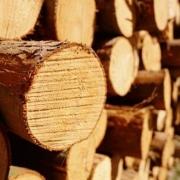 Россия теряет лесной рынок Китая