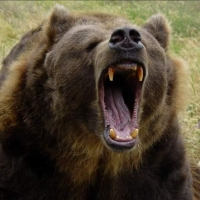 В Омской области медведь чуть не разорвал мужчину возле дома