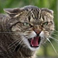 В Омске ищут опасные гормональные таблетки для котов