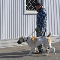 Накануне выборов в Омске избирательные участки проверят с собаками