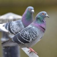Двоих омичей осудят за убийства голубей и собаки