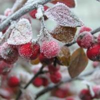 В Омске ожидаются заморозки до –15 градусов