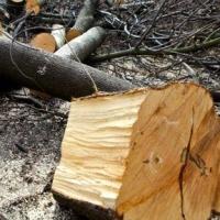 В Омске ради ремонта дорог вырубят деревья
