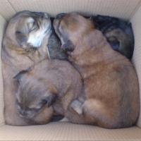 Подкинутых к приюту «Друг» щенков растерзали собаки