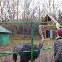 Потенциал Омского региона раскроется через бизнес-туры