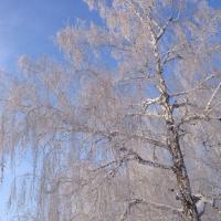 В Омске к концу недели начнутся снег и метели