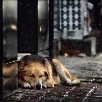 Живодеры до смерти замучили собаку в Омске