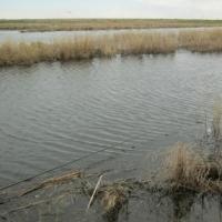 В Омской области от собственной удочки погиб рыбак