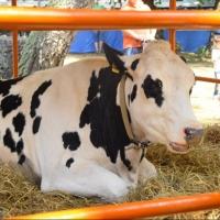 В 2017 году увеличат субсидии на закупку молока в омском регионе