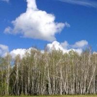 Китайские партнеры изучают лесные ресурсы Омской области для реализации инвестпроектов