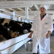Русская Поляна может лишиться коров и рабочих мест