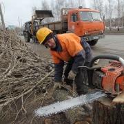 В Омской области нарубили дров на 76 миллионов рублей