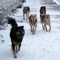 В омском Правительстве «забыли» выделить деньги на отлов собак