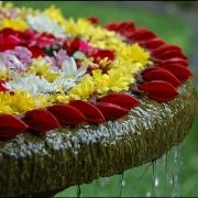 На проспекте Культуры в Омске появился цветочный фонтан