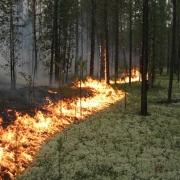 В Омской области введен особый противопожарный режим