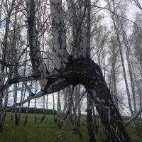 В Омской области в лесополосе дети нашли тело женщины