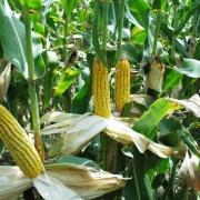 Аграриям рассчитали посадки