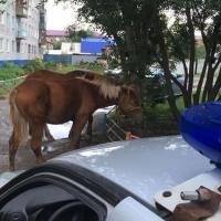 Омичам пришлось постоять в пробке из-за напуганных лошадей на дороге