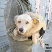Омские зоозащитники сообщили о массовой травле собак в Нефтяниках