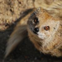 Кенгуру и мангуст из Новосибирска переехали в омский экоцентр