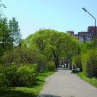 В Омске вопросами озеленения города займется суд