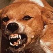 Бешеная собака покусала пятерых дачников в Омске
