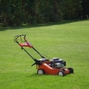 Газонную траву стригут по второму кругу
