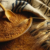 Более сотни хозяйств Омской области управились с уборкой зерна