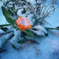 В Омской области зарегистрированы заморозки на почве