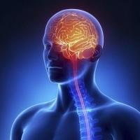 Ученые: подъем по ступенькам замедляет старение мозга