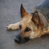 Полицейские проведут проверку по факту гибели собаки в Омске