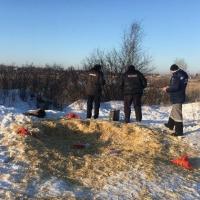 В Омске неизвестные расстреляли бездомных собак