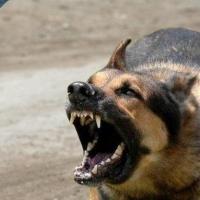 Омский парк выплатил покусанной собакой девочке 120 тысяч