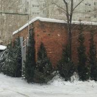 На нелегальных елочных базарах в Омске могут продавать зараженные деревья