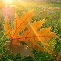 В Омске на этой неделе синоптики обещают солнечную погоду