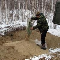 На подкормку диких животных в Омской области потратят 88 тонн зерна