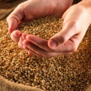 Агропромышленному комплексу предоставляют отсрочку выплат кредитов