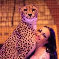 Омичи смогут увидеть шоу гепардов и побывать в Бразилии одновременно