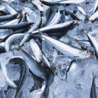 В Казахстан не пустили 21 тонну омской рыбы