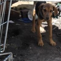 Омичи могут спасти от затопления собачий приют