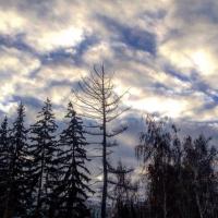 К субботе в Омской области спадет мороз
