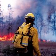 Лесным пожарам выделят учреждение
