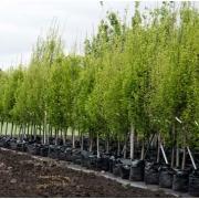 Лесхозы региона выполнили работы по созданию полезащитных лесополос