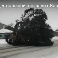 Калачинскому активисту не понравилось, как привезли городскую елку