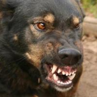 В Тарском районе Омской области ребенка покусала собака